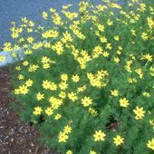 Long-Blooming Perennials - List of Flowers That Bloom All Summer