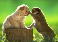 Amigos sabem a hora certa de chegar com carinhos #cachorros #fofos #carinho