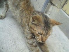 Meow Meow + gone
