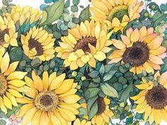 """8월15일 탄생화 해바라기[Sun Flower]-광휘(光輝) """"Brilliance"""" 오늘같은 꽃입니다:)"""