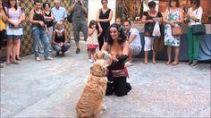 Dogdancing oriental Ànima Canina Mercat Medieval Ontinyent 2014