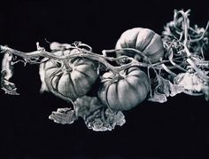Arresting black-and-white photos expose the beauty of ordinary vegetables