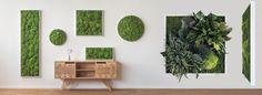 Pflanzen- und Moosbilder aus der Standardkollektion