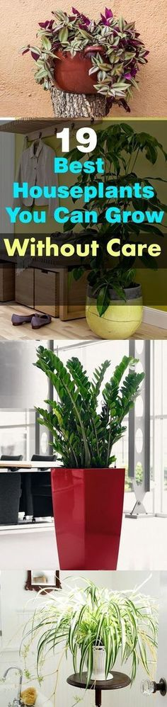These 19 Easiest Houseplants are perfect for lazy, busy and newbies, who want to plant easy indoor plants that grow with minimal care. These plants patiently survive the harsh conditions, they forgive your neglect and small mistakes. If you forget about w Outdoor Plants, Potted Plants, Garden Plants, Outdoor Gardens, Balcony Garden, Indoor Herbs, Patio Plants, Outdoor Landscaping, Cactus Plants