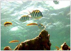Vida marina. Varadero, Cuba, Fish, Pets, Animals, North Shore, Marine Life, Cities, Scenery