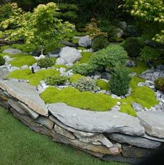 raised bed rock borders | Lime thyme, Southern California gardening source, garden blog ...