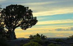 Canyon De Chelley Sunset by Deb Halberstadt