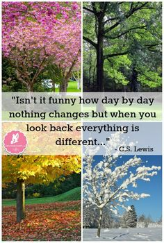 """""""Isn't it funny how day by day nothing changes but when you look back everything is different…"""" – C.S. Lewis"""