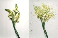 Broken Flowers Jon Shierman | itfashion.com