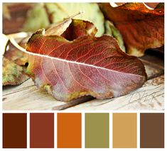 My old palette. Keep the golden flax, brown and deep rust and work in an earthy blue to change a room with accent colors....