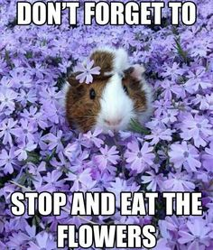 Stop and eat the flowers