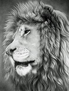 lion drawing 4 http://hative.com/lion-drawings/
