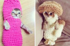 Weekend Faves: Crochet Kittens, Fabric Stash Remedies, and more! by Kollabora | Blog post | Kollabora