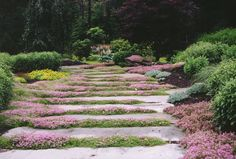 Natural Garden Pathway & Perennial Garden in Bergen County, NJ Natural Landscaping, Landscaping With Rocks, Landscaping Tips, Garden Borders, Garden Paths, Rock Pathway, Deciduous Trees, Natural Garden, Growing Plants