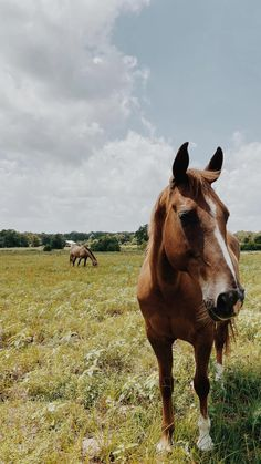 Cute Horse Pictures, Beautiful Horse Pictures, Most Beautiful Horses, Horse Photos, Cute Horses, Pretty Horses, Happy Animals, Farm Animals, Horse Background