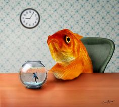 A Fish Out of Water ~ by Carrie Jackson Studios