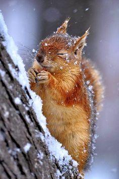 Wintery Squirrel