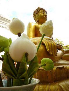 Buddha, Lotus, Chiang Mai, Thailand