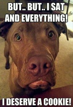 25 Funny Dog Memes - Funny Dog Quotes - I swear this is what goes through my dog's head every time we won't give him people food. Lol The post 25 Funny Dog Memes appeared first on Gag Dad. Funny Dog Memes, Funny Animal Memes, Cute Funny Animals, Funny Cute, Funny Dogs, Funny Pitbull, Hilarious Sayings, Pitbull Pics, Animal Funnies