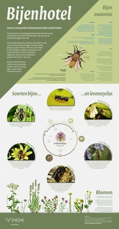 Bijenhotel informatiebord - Too Many Words Green News, Homestead Farm, Human Anatomy And Physiology, Busy Bee, National Parks, Nature Nature, Words, Bugs, Layout