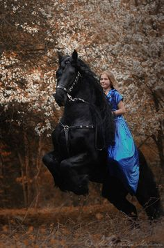 """Horse - A Baroque Friesian: And Young Rider ~ Upon His Back ~ """"Black And Blue! Most Beautiful Horses, All The Pretty Horses, Animals Beautiful, Horse Photos, Horse Pictures, Clydesdale, Horse Girl Photography, Equine Photography, Friesian Horse"""