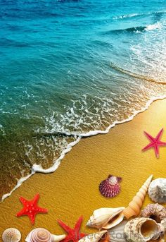 Beach Sand Star Fish Shells 00013 Floor Decals Wallpaper Wall Mural Stickers Print Art Bathroom Decor Living Room Kitchen Waterproof Business Home Office Gift - Hacker Wallpaper, 3d Wallpaper For Walls, Ocean Wallpaper, Wallpaper Iphone Cute, Floor Decal, Seashell Art, Giant Paper Flowers, Office Gifts, Pretty Pictures