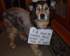 """Let him wish a """"Happy Birthday!"""" Please send us your dog photo or video and we… Happy Birthday Buddy, Dog Forum, Dog Photos, Type 3, Theater, Dog Lovers, Wish, Club, Let It Be"""