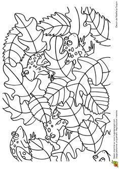 Coloriage cache cache feuilles crapauds sur Hugolescargot.com - Hugolescargot.com Colouring Sheets For Adults, Coloring For Kids, Food Coloring, Coloring Sheets, Adult Coloring, Gross Motor Activities, Preschool Activities, Secret Garden Colouring, Frog Crafts