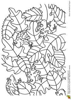 Cache Cache Feuilles Crapauds, page 5 sur 16 sur HugoLescargot.com