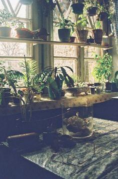 Plants and Lighting