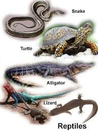 reptiles with names - Google Search | *REPTILES & SLITHERING ...