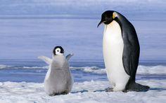 Pinguins da Antártida