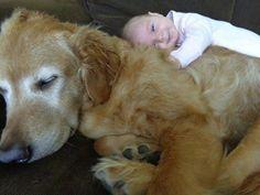 Un perro llega a su casa y se acuesta en el suelo, cuando leen el mensaje de su cuello...   LikeMag   We Like You