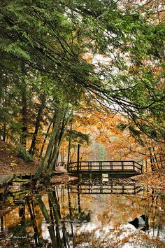 Chenango Valley State Park by Christina Rollo