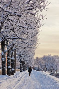 Winter Snow in Saint Petersburg Russia by NostalgiaPhotographs, $30.00