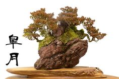 Satsuki bonsai on a rock with red leaves