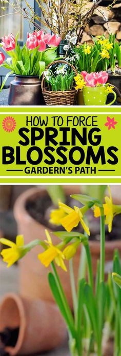 Put out the welcome mat for spring with an array of flowering bulbs and branches. Learn what forcing means, and how to select, prepare, and cultivate an indoor profusion of daffodils, forsythia, hyacinths, and pussy willow. Read more for everything you need to know, from your friends at Gardener's Path.