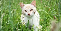 Nuisibles pour la faune, deux millions de chats doivent être abattus en Australie  :'( sniff :'( sniff BOURREAU :'( ASSASSIN :'( SAUVAGE :'( CONNARD :'( POURRI :'( DEBILE :'( sniff :'( sniff  AMORE