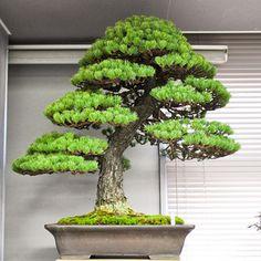 Green club Japan