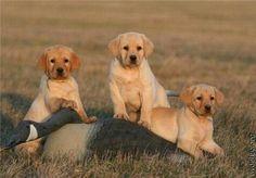Dog...dog...dog...GOOSE!