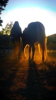 Cute Horses, Pretty Horses, Horse Love, Beautiful Horse Pictures, Beautiful Horses, Baby Animals Pictures, Cute Animals, Beach Horseback Riding, Horse Background