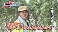 ちちんぷいぷい 2015年11月03日 『石田ジャーナル 日本の農業を変える!? スマートアグリ』 1080p