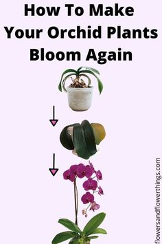 Learn how to make orchids bloom again and understand why won't my orchids bloom. You can stimulate and trigger your orchid houseplant to produce flowers. Indoor Orchids, Orchids Garden, Garden Plants, Flowering House Plants, Cactus Plants, Orchid Plant Care, Indoor Orchid Care, Orchid Fertilizer, Orchid Planters