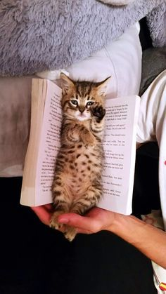 Furry Bookmark