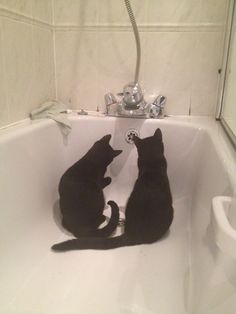 Black kittens in the bath