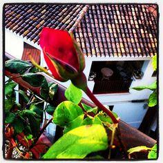 #rosa#terraza#godella Fotografia de Victor Martinez Marti