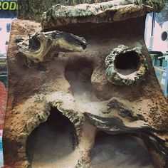 Issues With Keeping Lizards As Pets Reptile Decor, Reptile Room, Reptile Cage, Reptile Enclosure, Tarantula Enclosure, Terrariums Gecko, Leopard Gecko Terrarium, Reptile Terrarium, Tarantula Habitat