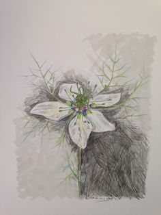 love in a mist flower -crayon, pencil and felt tip