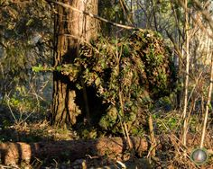 Full camouflage, bad positioning though, he'd appear as tree cancer Military Camouflage, Military Gear, Military Weapons, Military Life, Military History, Sniper Camouflage, Sniper Gear, Airsoft Sniper, Snipers Hide