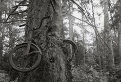 bikes in trees | bike_in_tree.JPG